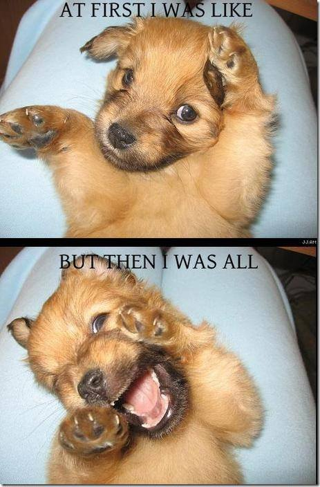 funnypuppy