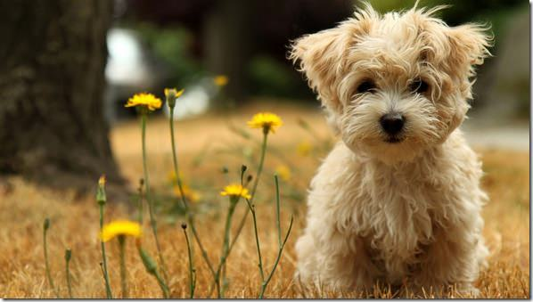 puppy_in_the_field