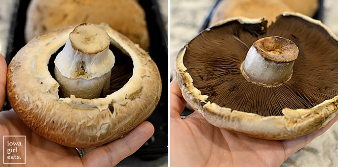 underside of portobello mushrooms